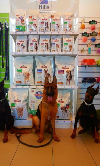 http://dogspotk9.gr/wp-content/uploads/2018/08/trofes-kai-aksesouar-2.jpg