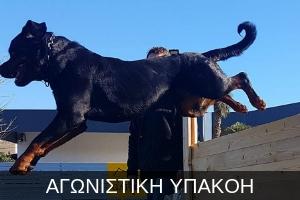 http://dogspotk9.gr/wp-content/uploads/2018/09/ΑΓΩΝΙΣΤΙΚΗ-ΥΠΑΚΟΗ-2.jpg