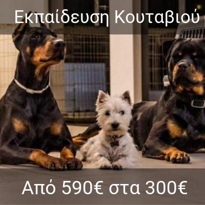 f8b8cd214c6a HomeΕκπαίδευση Σκύλου Τιμές - DOGSPOT K9