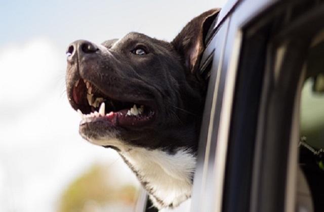 Ταξίδι με Μεγάλους Σκύλους