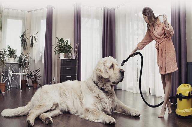 Φιλοξενία Μεγάλου Σκύλου