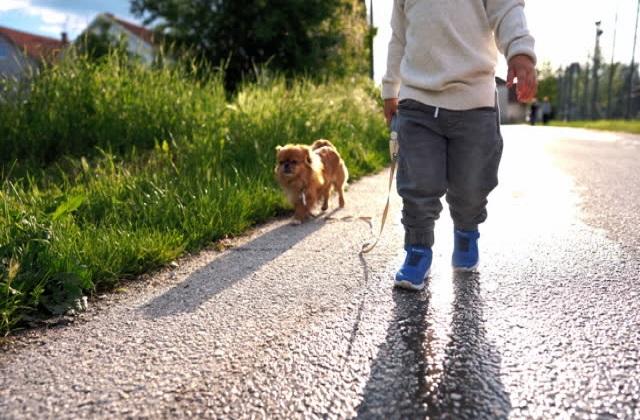 Πεκινουά Περπάτημα