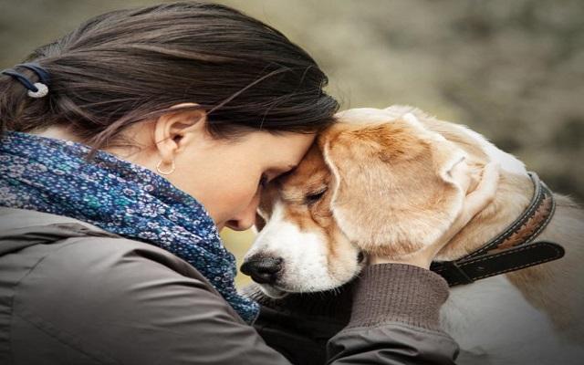 Σκύλοι και Θλίψη