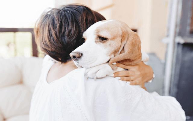 Σκύλοι και Θλίψη2