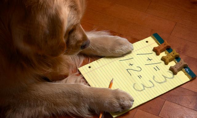 Σκύλοι και Μαθηματικά