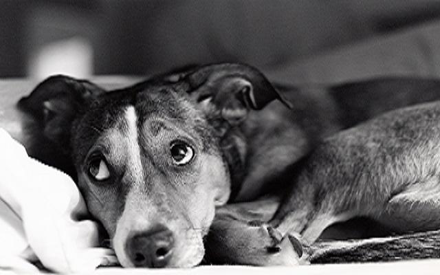Σκύλοι και Πένθος