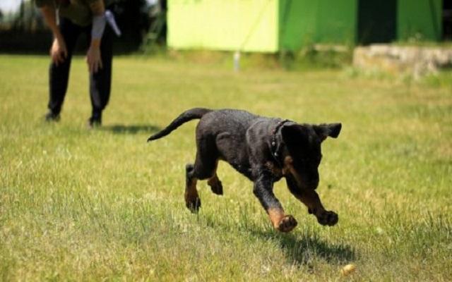 Σκύλος και εντολές