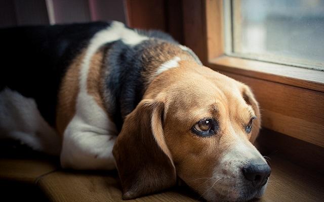 Απουσία Ιδιοκτήτη Σκύλου