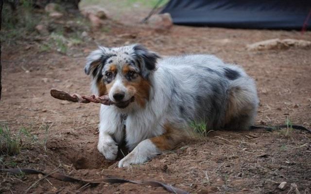 Γιατι Σκαβουν οι Σκυλοι