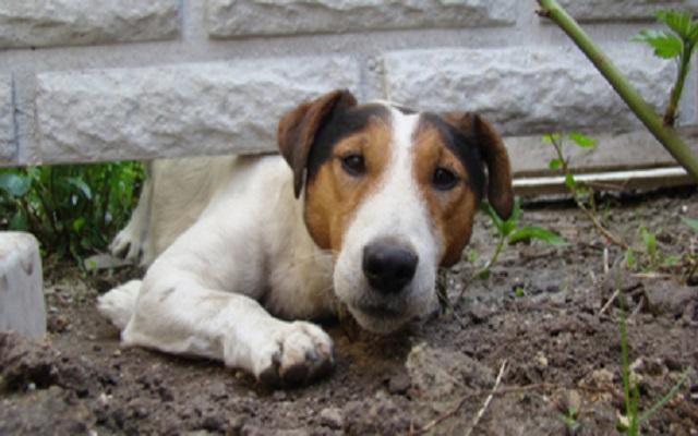 Σκύλος και Σκάψιμο