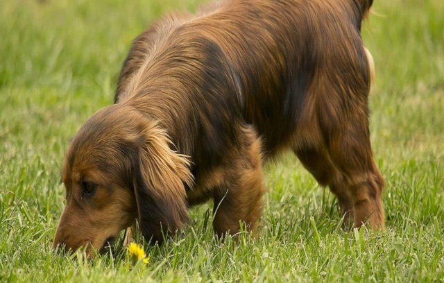 Η Όσφρηση του Σκύλου