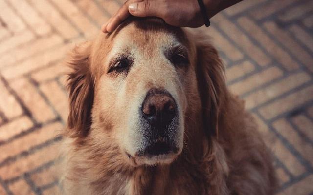 Η Γήρανση του Σκύλου