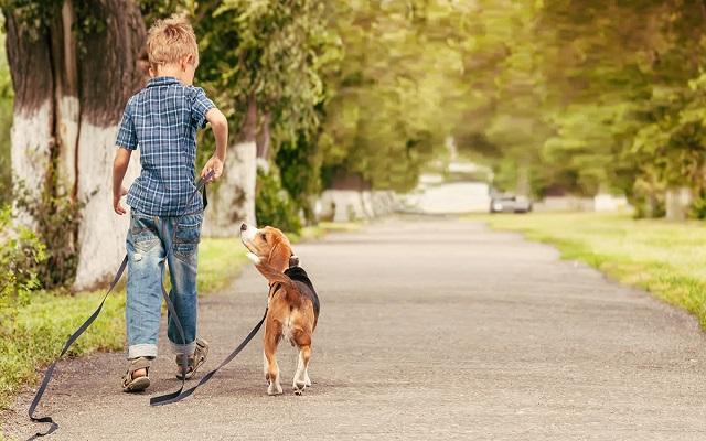 Περίπατοι με Σκύλο