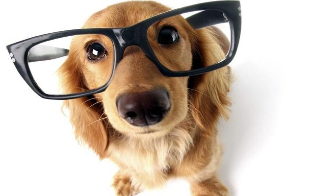 Σκύλοι και Βλέμμα