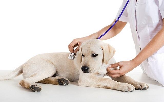 Υγεία Σκύλου