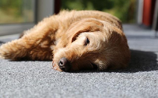 Λήθαργος Σκύλου