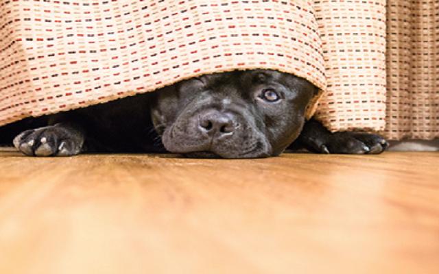 Ο Σκύλος Κρύβεται