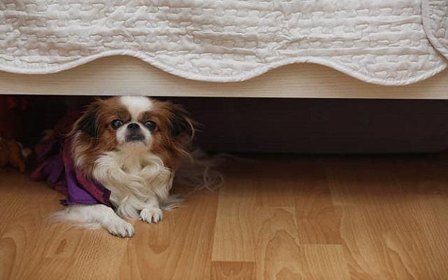 Σκύλος και Κρύψιμο