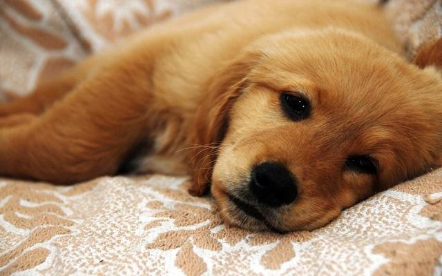 Συμπεριφορά Άρρωστου Σκυλου
