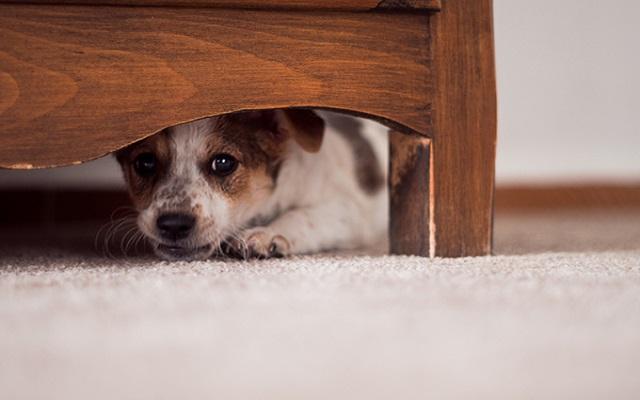 Φοβισμένος Σκύλος