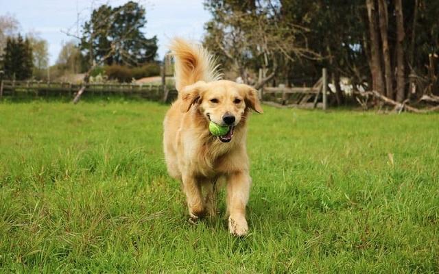 Παιχνιδιάρικη Διάθεση Σκύλου