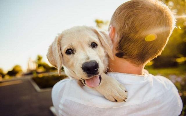 Σκύλος Αιώνια Φιλία