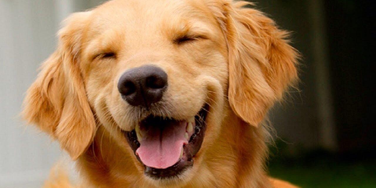 http://dogspotk9.gr/wp-content/uploads/2020/03/Χιούμορ-και-Σκύλοι-1280x640.jpg