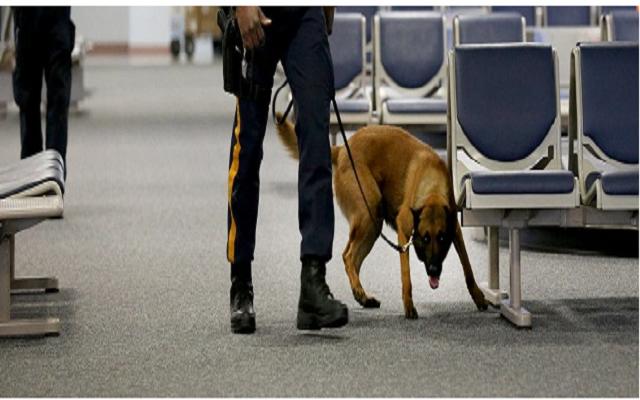 Αστυνομικοί Σκύλοι Ανίχνευση