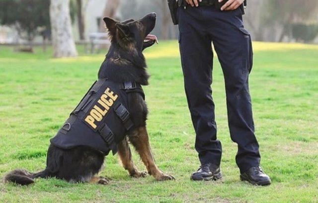 Τι Κάνουν οι Αστυνομικοί Σκύλοι;
