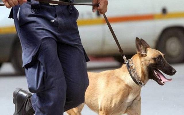 Αστυνομικοί Σκύλοι