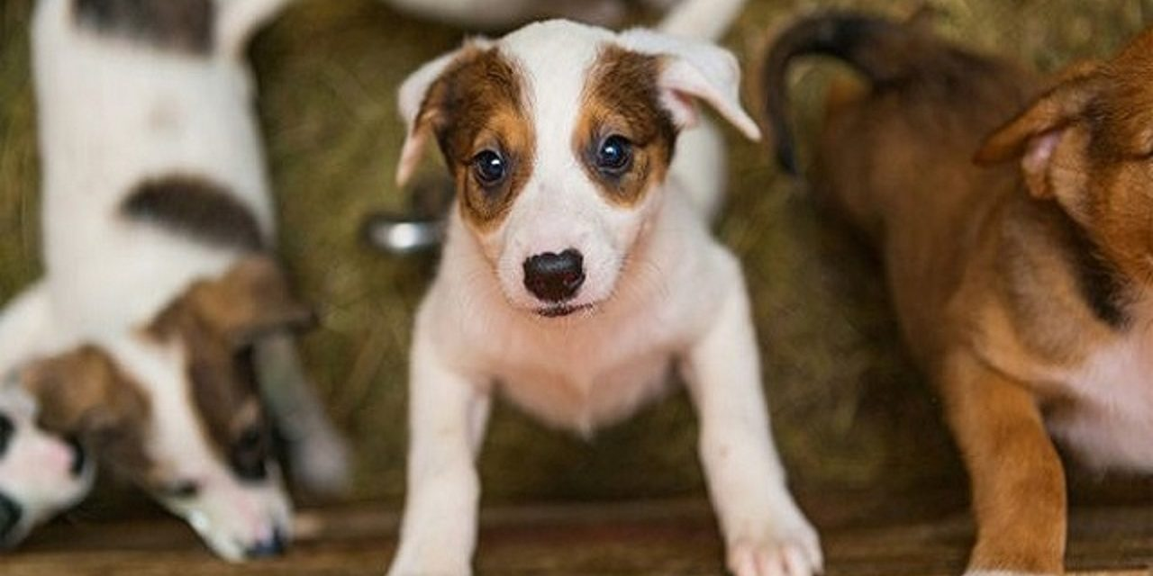 http://dogspotk9.gr/wp-content/uploads/2020/04/Κοινωνική-Αποστασιοποίηση-Κουταβιού-1280x640.jpg