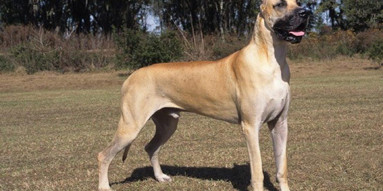 http://dogspotk9.gr/wp-content/uploads/2020/04/Μεγάλος-Δανός-1280x640.jpg
