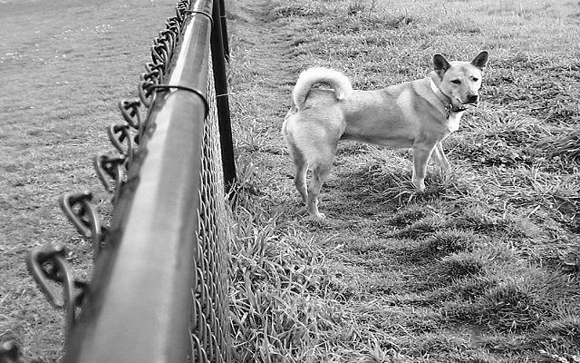 Συμπεριφορά Σκύλου1