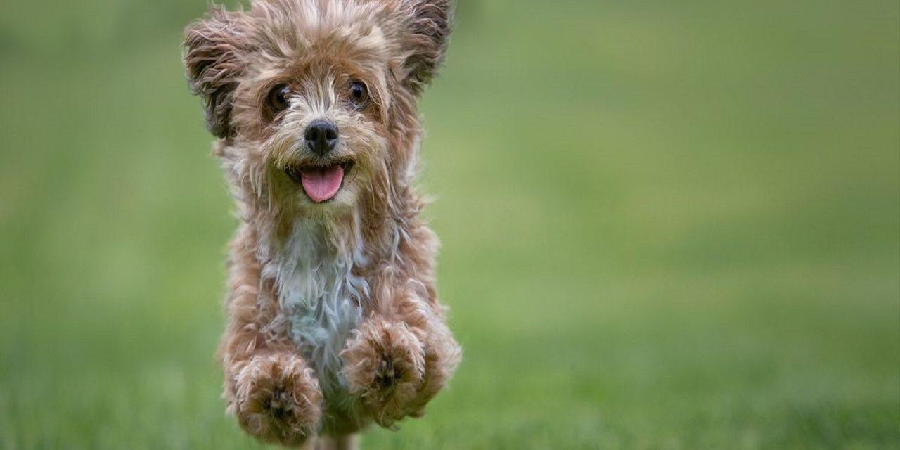 http://dogspotk9.gr/wp-content/uploads/2020/04/Υποαλλεργικοί-Σκύλοι-1-1280x640.jpg